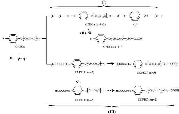 Growth Of Pseudomonas Sp Tx1 On A Wide Range Of Octylphenol