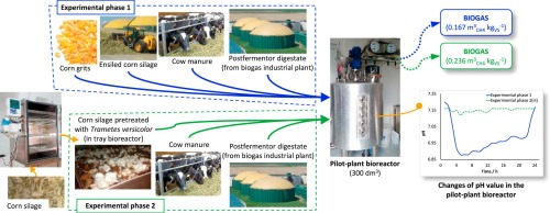Corn silage fungal-based solid-state pretreatment for