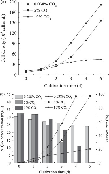 Carbon Dioxide Fixation D With Ammonium Uptake By