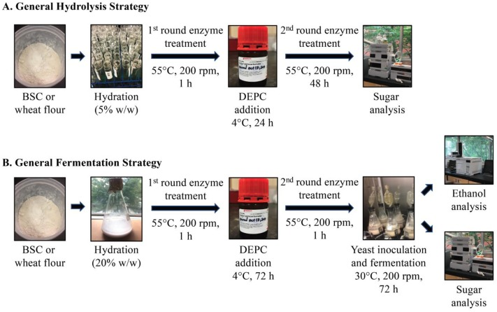 The Potential Of Fiber Depleted Starch Concentrate Produced Through Air Currents Assisted Particle Separation Of Barley Flour In Bio Ethanol Production Sciencedirect