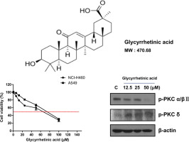 Inhibition of protein kinase C α/βII and activation of c-Jun