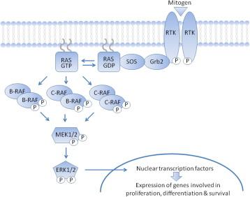 Recent progress on MAP kinase pathway inhibitors - ScienceDirect on mtor inhibitor, protein kinase inhibitor, pi 3 kinase inhibitor, tyrosine kinase inhibitor, jak kinase inhibitor,