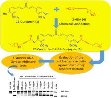 Chemical conjugation of 2-hexadecynoic acid to C5-curcumin