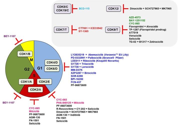 Cyclin dependent kinase (CDK) inhibitors as anticancer drugs
