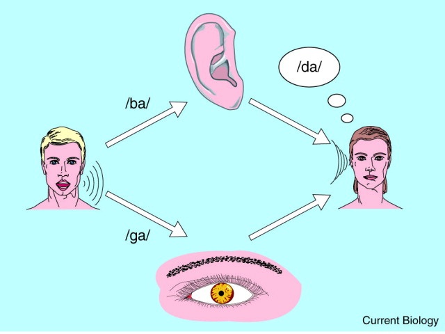 Multisensory integration: perceptual grouping by eye and ear ...