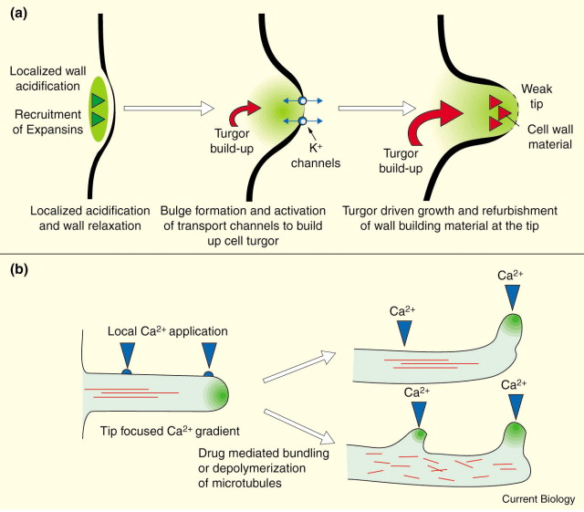Cell Growth How To Grow And Where To Grow Sciencedirect