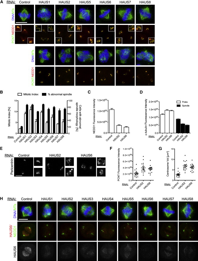 HAUS, the 8-Subunit Human Augmin Complex, Regulates Centrosome and ...