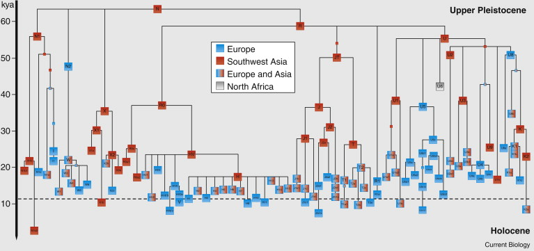 The Archaeogenetics of Europe - ScienceDirect