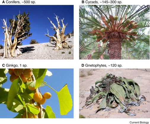 Plant Evolution: Pulses of Extinction and Speciation in