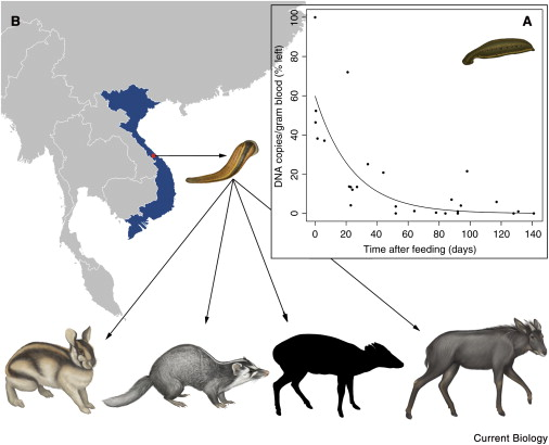 Screening mammal biodiversity using DNA from leeches