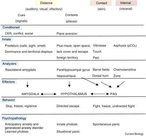The Biology of Fear - ScienceDirect