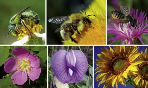 Flower-pollinator relationships dating