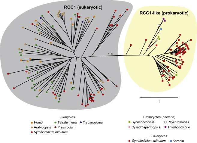 Draft Assembly Of The Symbiodinium Minutum Nuclear Genome Reveals
