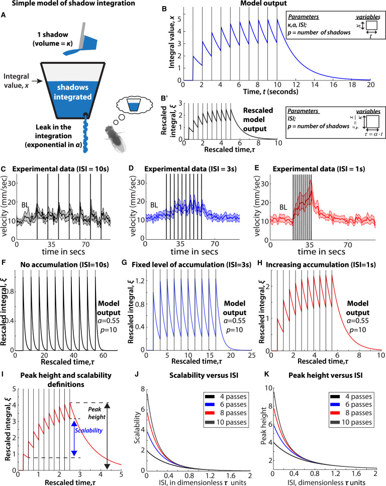 Behavioral Responses to a Repetitive Visual Threat Stimulus