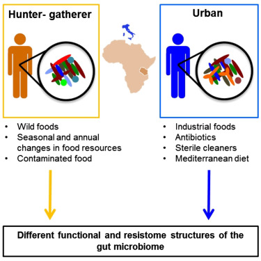 Metagenome Sequencing of the Hadza Hunter-Gatherer Gut