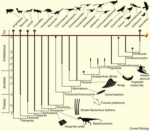 The Origin and Diversification of Birds - ScienceDirect
