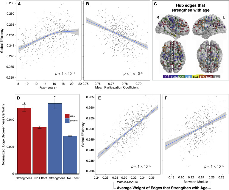Modular Segregation of Structural Brain Networks Supports
