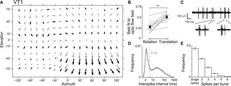 Optical Flow Github