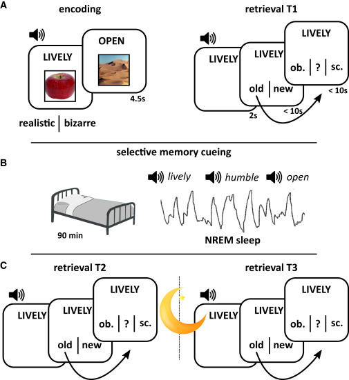 Memory Consolidation Is Linked to Spindle-Mediated