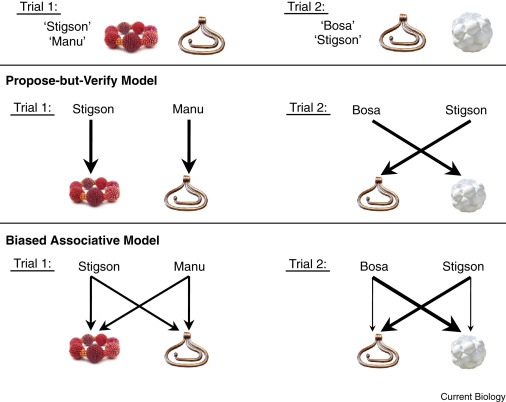 Word Learning: Associations or Hypothesis Testing? - ScienceDirect