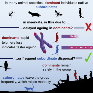 Graphical abstract for this article
