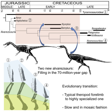 Two Early Cretaceous Fossils Document Transitional Stages In