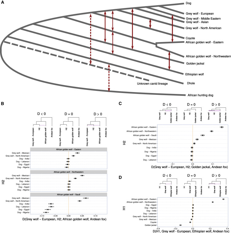 Interspecific Gene Flow Shaped the Evolution of the Genus
