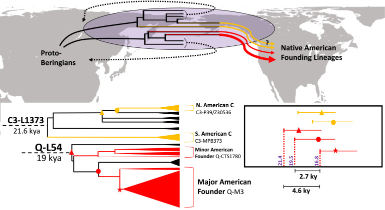 Y Chromosome Sequences Reveal a Short Beringian Standstill