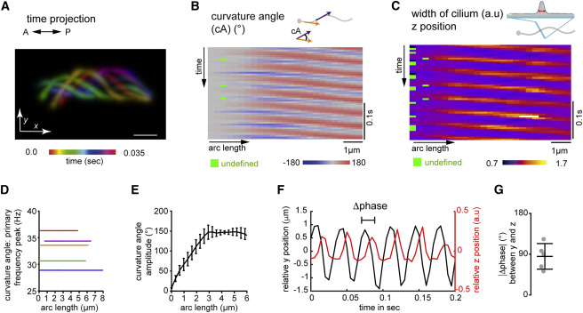 Ciliary Beating Compartmentalizes Cerebrospinal Fluid Flow
