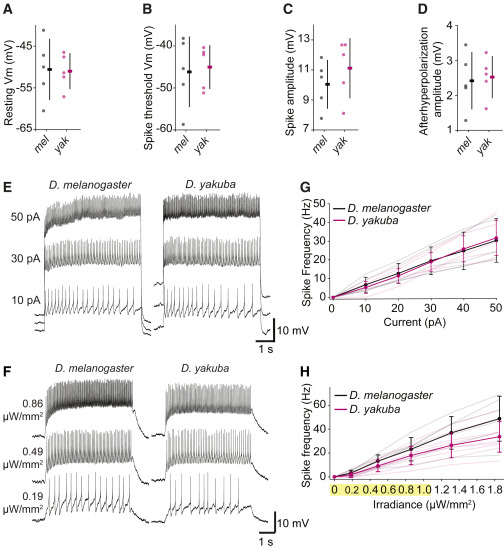 Neural Evolution of Context-Dependent Fly Song - ScienceDirect
