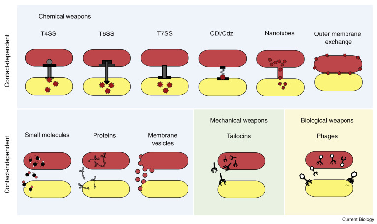 The Evolution and Ecology of Bacterial Warfare - ScienceDirect