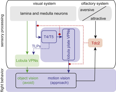 Olfactory and Neuromodulatory Signals Reverse Visual Object