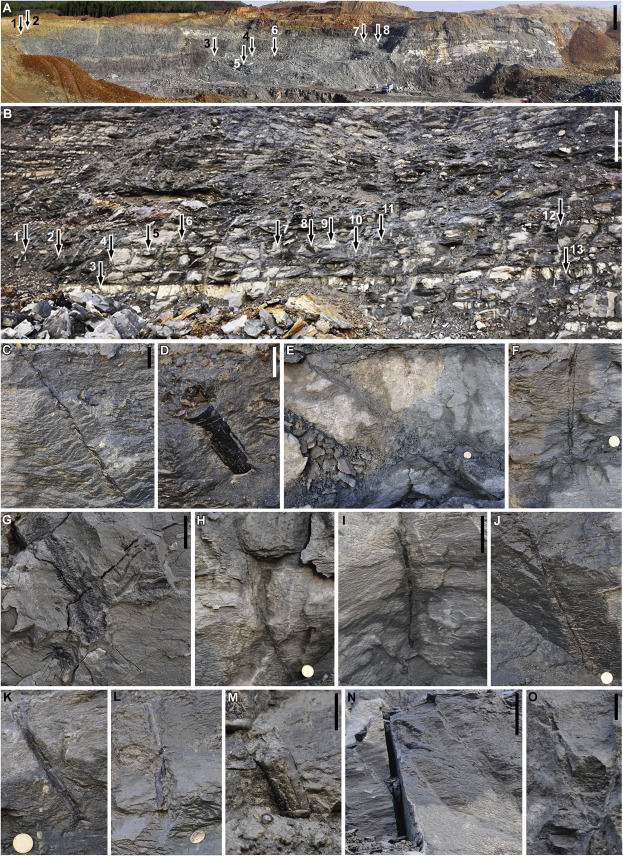 The Most Extensive Devonian Fossil Forest with Small