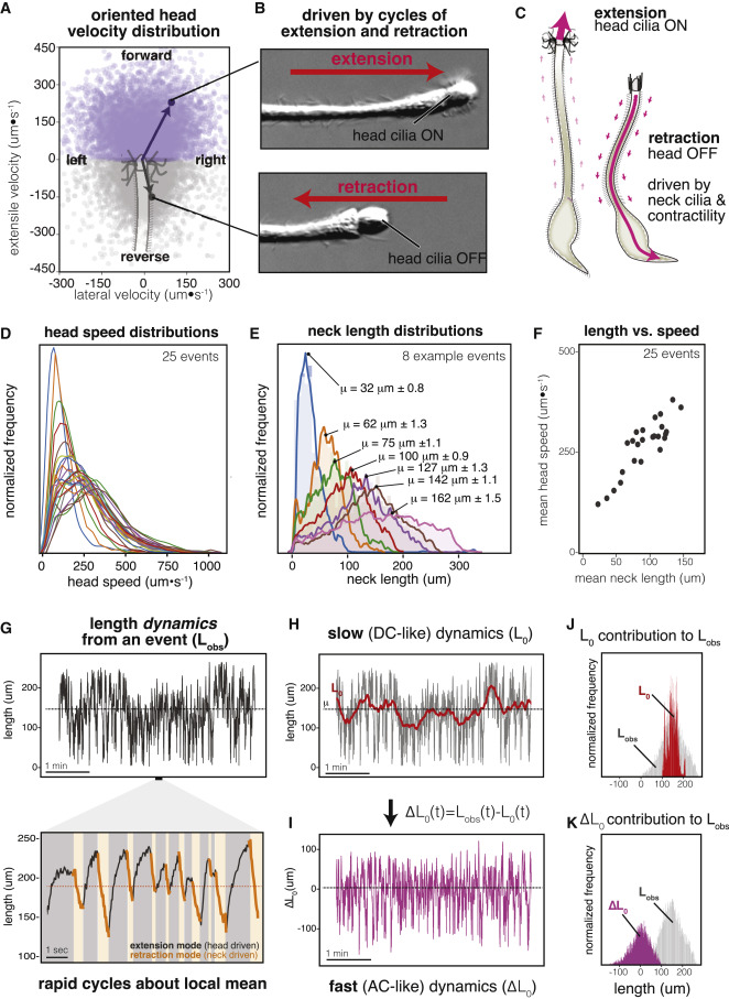 Coupled Active Systems Encode an Emergent Hunting Behavior