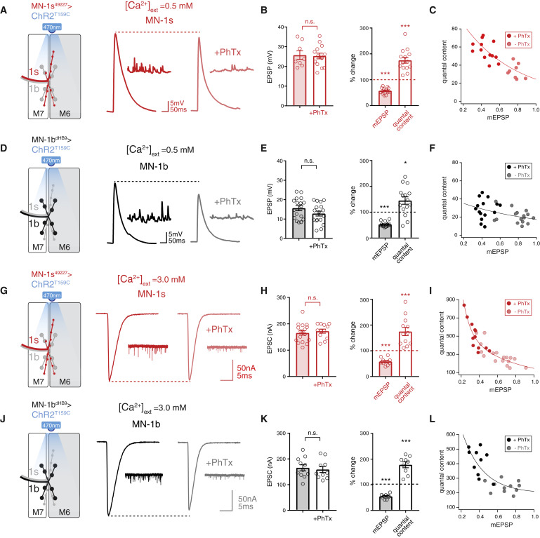 Target-wide Induction and Synapse Type-Specific Robustness ... on