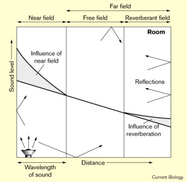 Auditory perception: The near and far of sound localization