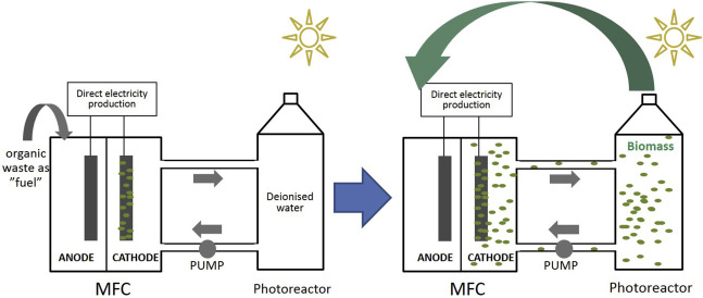 Self-sustainable electricity production from algae grown in