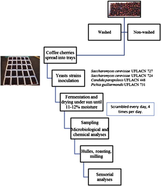Coffee Flavor Chemistry Pdf