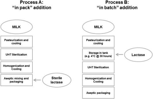 The Quality Of Low Lactose Milk Is Affected By The Side Proteolytic