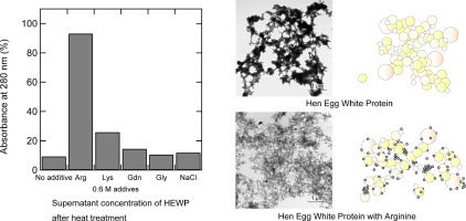 Arginine prevents thermal aggregation of hen egg white proteins graphical abstract fandeluxe Gallery