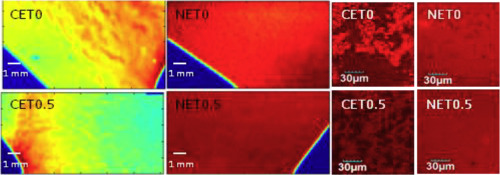 Relationship between nano/micro structure and physical properties of TiO2-sodium caseinate composite films