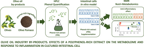 Olive oil industry by-products  Effects of a polyphenol-rich