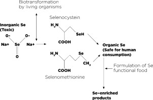 Designing selenium functional foods and beverages: A review