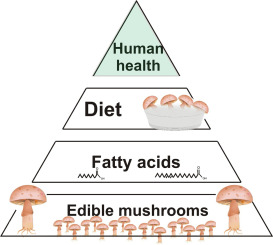 Edible mushrooms as a ubiquitous source of essential fatty
