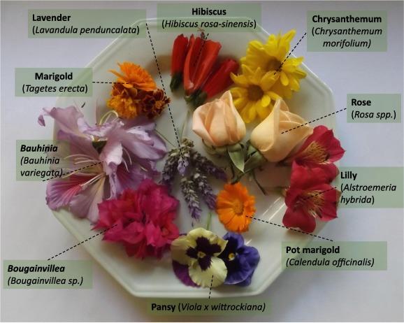 Dried Flowers /& Petals 61 Rose Lavender Jasmin Chamomile Cornflower etc. Types