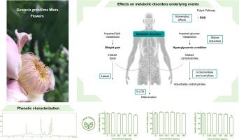 Gustavia Gracillima Miers。用HPLC-DAD-ESI / MSN对酶促靶向酶促靶标的酶促靶标和其多酚含量的表征