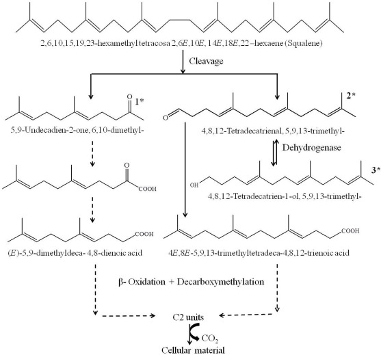 Biodegradation of squalene and n-hexadecane by Gordonia