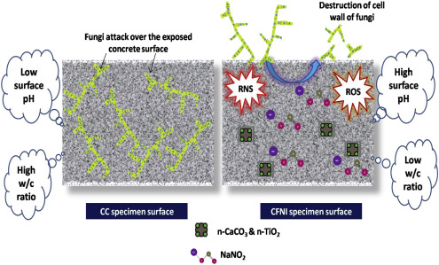 Fungal resistance of nanomodifiers and corrosion inhibitor