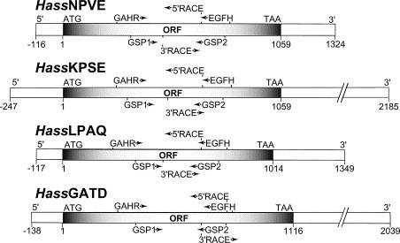 Multiple acyl-CoA desaturase-encoding transcripts in pheromone ...