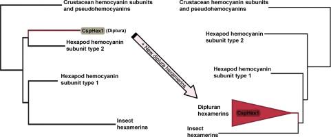 Evolutionary implications of dipluran hexamerins - ScienceDirect